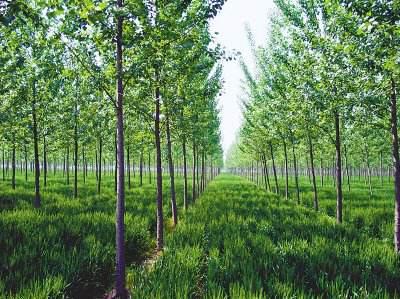 钦州市林业局选择华天动力协同OA系统开启绿色信息化管理
