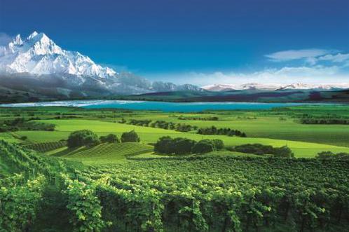 葡萄酒业携手华天动力OA实现内外协同,助力走向零售前列